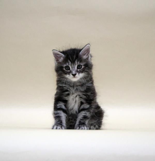 Первая фотосессия наших котят